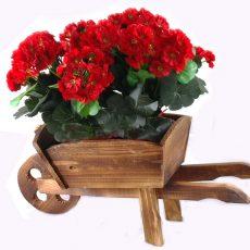 kültéri virágtartók (1)